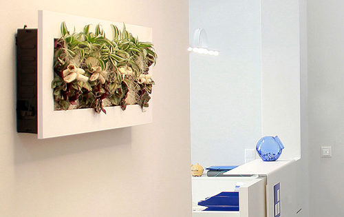 pflanzen an der wand fabulous deko flaschen wand befestigen pflanzen with pflanzen an der wand. Black Bedroom Furniture Sets. Home Design Ideas